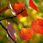 15 причин полюбить осень